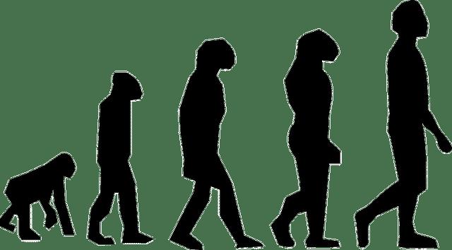 diseñador web, evolución